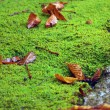 Stock Photo: Leaves on Moss