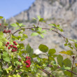 Foto Stock: Wild blackberry