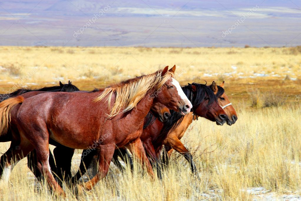 Horses on altai from indian summer — Stock Photo #1369188