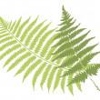 Fern leaves — Stock Vector #1507818