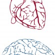 Heart and brain - Stock Vector