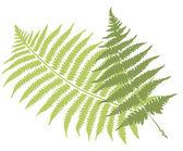 Fern bladeren — Stockvector