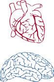 Hjärta och hjärna — Stockvektor