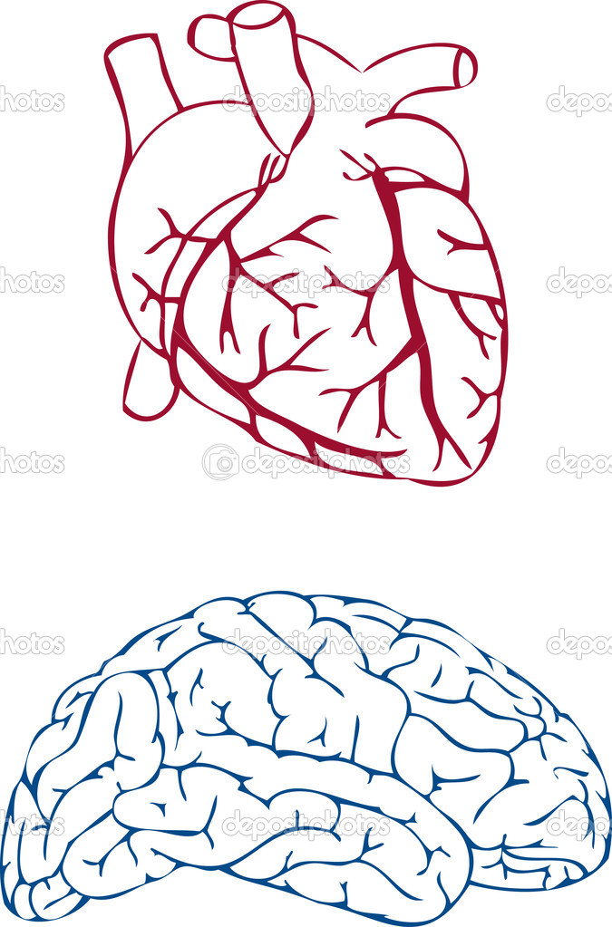 Heart and brain, vector — Stock Vector #1507819
