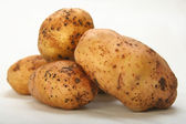 Crude potatoes — Stock Photo