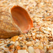 Cockleshell on sea sand — Stock Photo