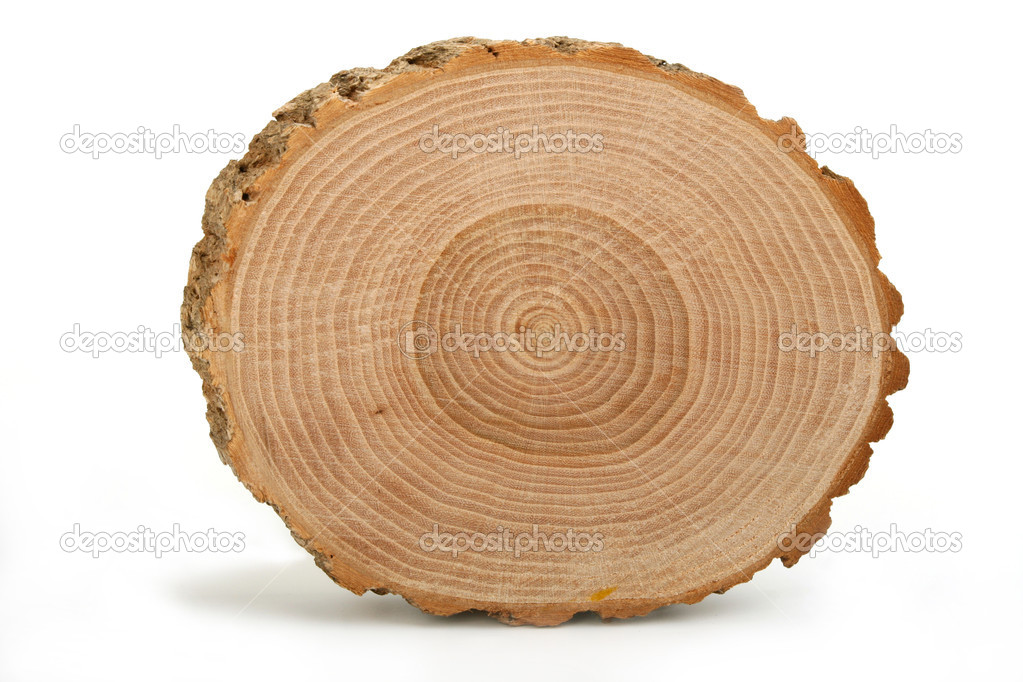 old wood texture background with tree rings pics, Stock ...
