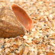 Cockleshell on sea sand — Stock Photo #1634167