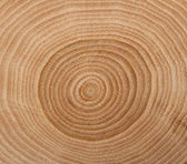 Wooden cut texture — Stock Photo