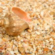 Cockleshell on sea sand - Stock Photo