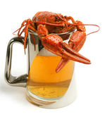 Beer mug with crawfish — Stock Photo