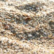 Sea sand from cockle-shells - Stock Photo