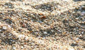 Sea sand from cockle-shells — Stock Photo