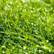 Thick grass with dew — Stock Photo