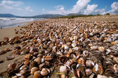 Sea coast with shell — Stock Photo