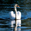 One swan — Stock Photo #1375546