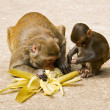 Mommy and baby monkeys — Stock Photo #1438643