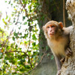 Stock Photo: Watching monkey