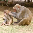 Mommy and baby monkeys — Stock Photo #1438681