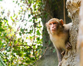 Watching monkey — Stock Photo