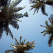 Tops of four palms — Stock Photo