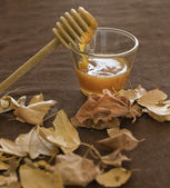 Honey and fall — Stock Photo