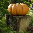 Pumpkin on a Trank - Stock Photo