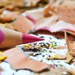 Pink pencil and shavings - Stock Photo
