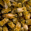Bees inside beehive with the queen bee - Stock Photo
