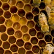 Bees inside  beehive - Stock Photo