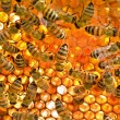 Bees inside beehive — Stock Photo #1342225