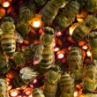 Stock Photo: Bees inside beehive