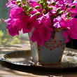 Bouquet of bougainvillea — Stock Photo