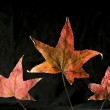 Stock Photo: Autumn Leafs