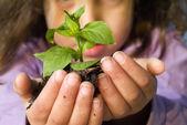 Girl holding plant — Stock Photo