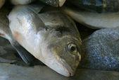Sea bream head in the market — Stock Photo