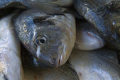 Sea bream head in the market — Stock Photo