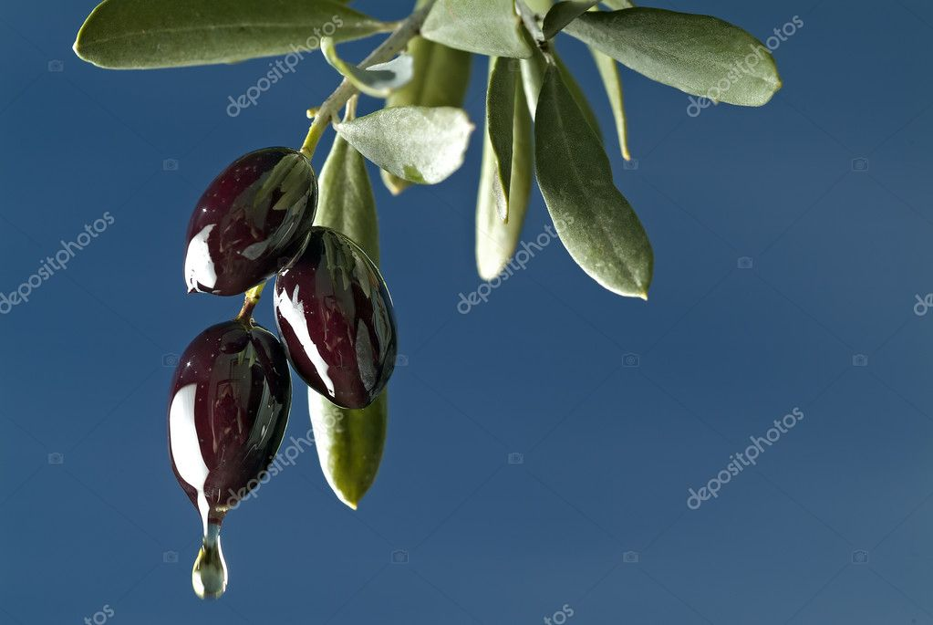 Drop of oil from three black olives on branch against blue sky — Stock Photo #1341314