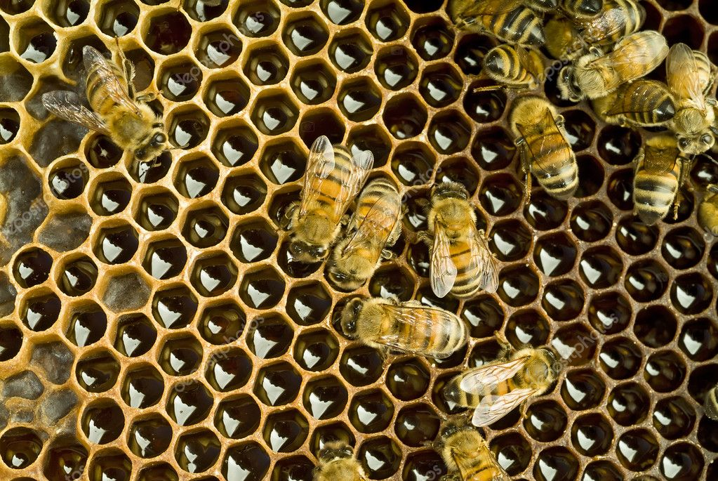 Bees inside a beehive   Stock Photo #1342264