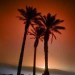 Three palms sunrise — Stock Photo #1413280