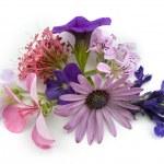 Floral background design element — Stock Photo #1413485