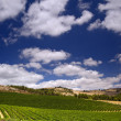 Vineyards in the Galilee - Stockfoto