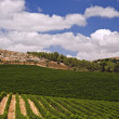 Vineyards in Galilee — Stock Photo #1413965