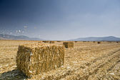 Hay bayle in the field — Stock Photo