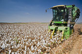 Cotton harvest — Foto Stock
