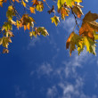 Autumn leafs against blue sky — Stock Photo