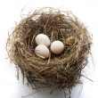 Nest and eggs - Foto de Stock