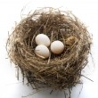 Nest and eggs — Stockfoto