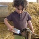 Boy feeding baby goat — Stock Photo