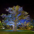 Baobab tree by night - Stock Photo